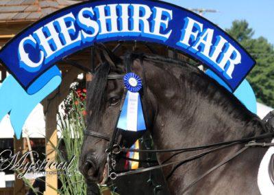 cheshire-horse-show